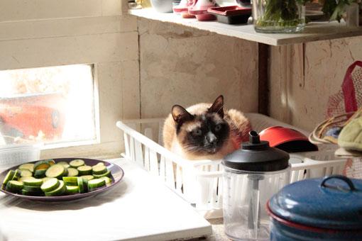 Un chat dans l'égouttoir