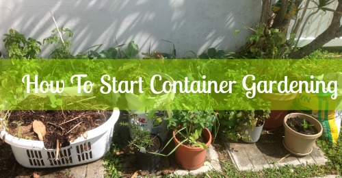 How To Start Container Gardening, How To Start Container Gardening