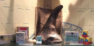 Photo of a rhino horn and several products claiming to have rhino horn in them