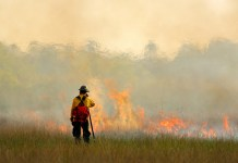 photograph of lone firefighter standing before small wildfire blaze