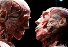 close-up photograph of Body Worlds Exhibition