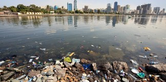 photograph of water pollution with skyscrapers on opposite shoreline