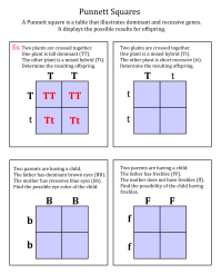 Printables. Punnett Square Worksheet. Mywcct Thousands of ...