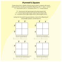 5 Best Images of Printable Punnett Square Worksheets ...
