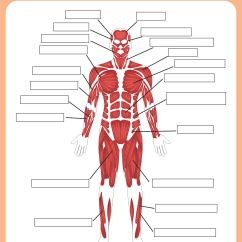 Blank Muscle Diagram To Label Wiring Alternator 6 Best Images Of Printable Worksheets Anatomy - Head And Neck Muscles ...