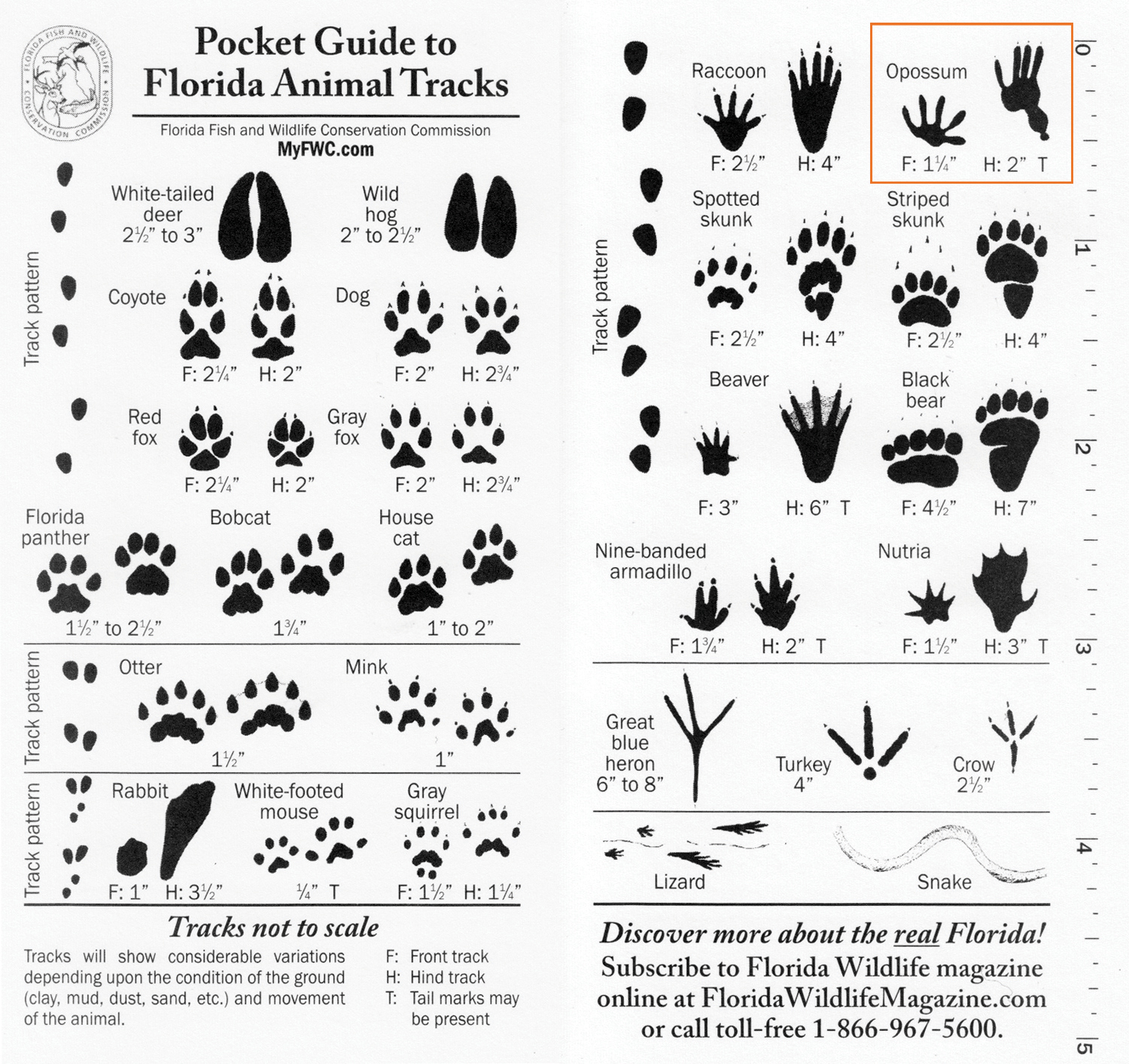 8 Best Images Of Printable Animal Track Identification