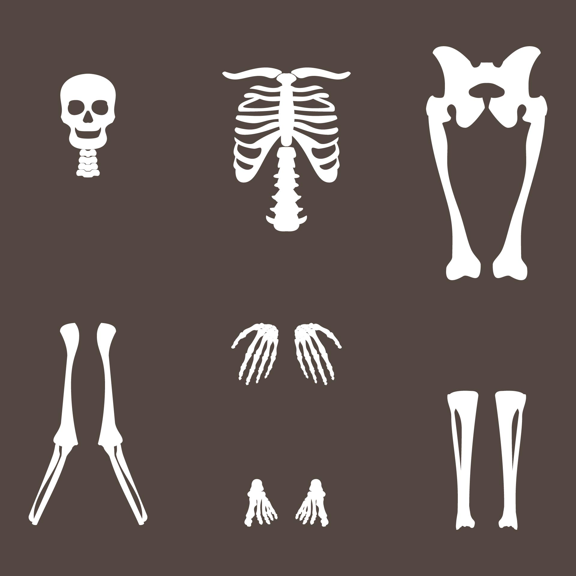 8 Best Images of Halloween Printable Skeleton Parts