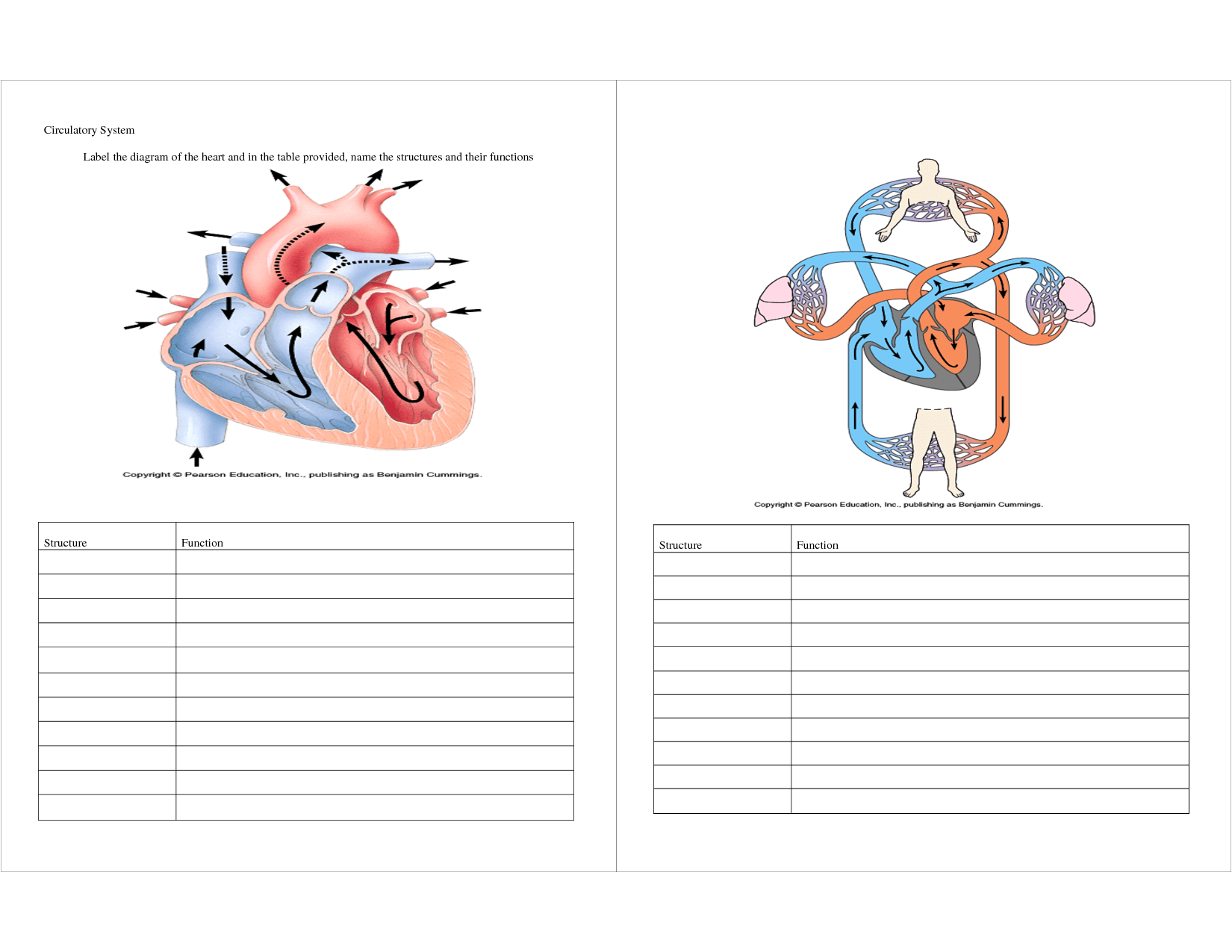 4 Best Images Of Diagram Of Circulatory System Printable