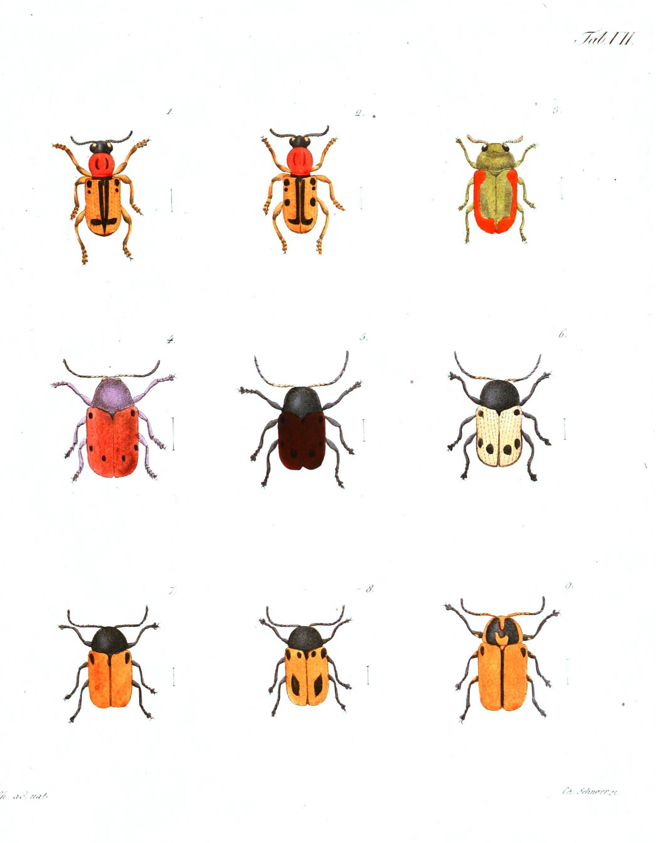 6 Best Images Of Free Printable Bugs And Insects