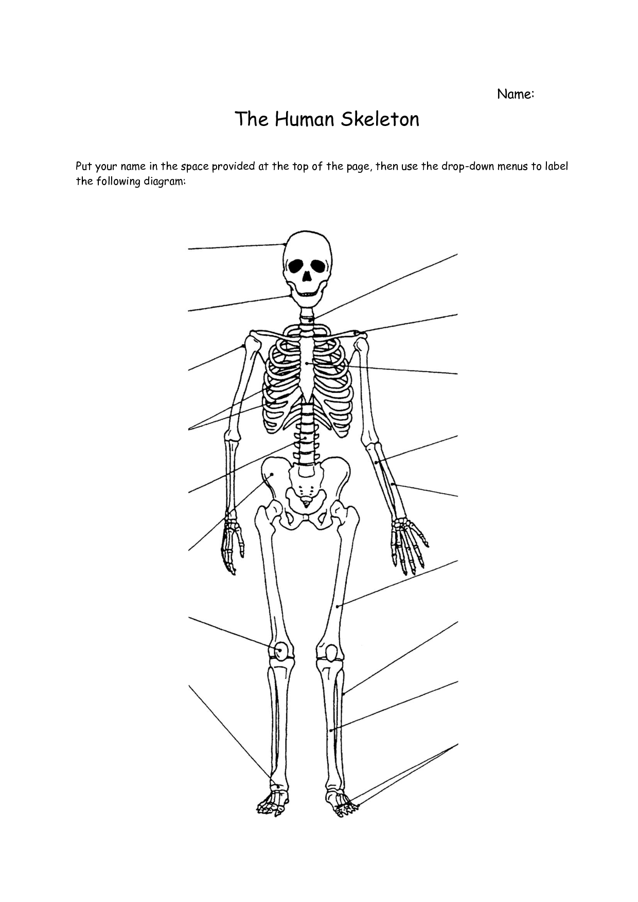Worksheet On Our Skeletal System