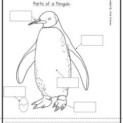 Polar Bear Fur Diagram Tao 110 Atv Wiring 6 Best Images Of Preschool Printables Bird Parts