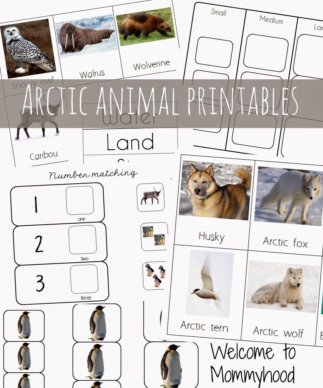 7 Best Free Preschool Printables Arctic
