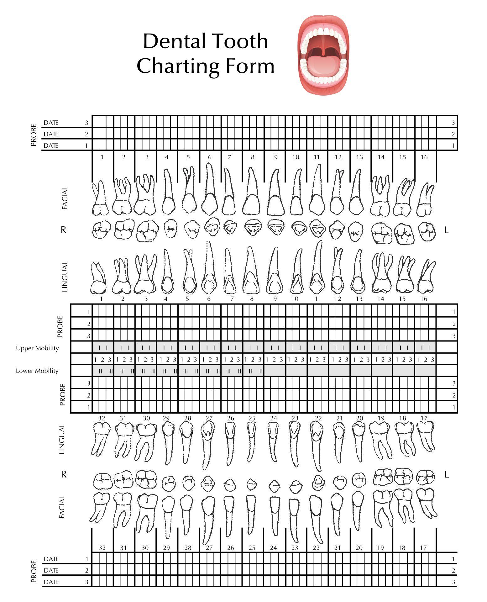 Teeth Worksheet With Number 8