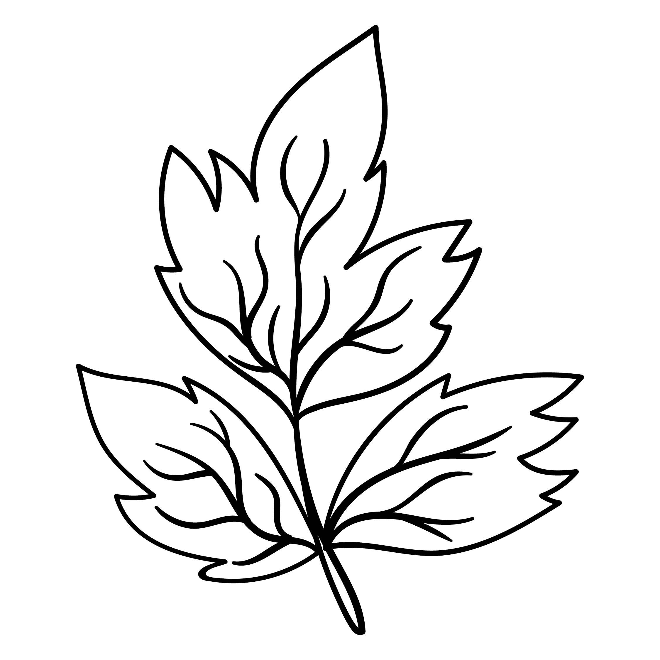 6 Best Images Of Oak Leaf Template Printable