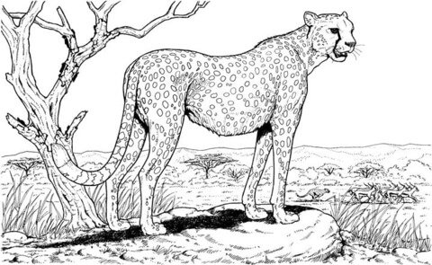 7 Best Images of Nature Printable Coloring Pages For