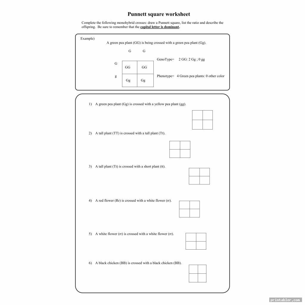 Printable Punnett Square Worksheets
