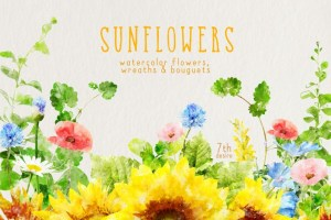 Beautiful sunflower clipart