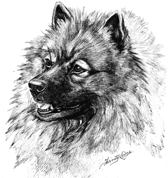 12 Keeshond Notelets With Envelopes Print By Townsend