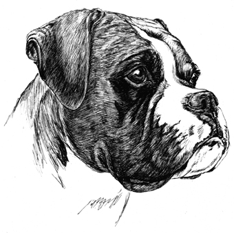 Boxer Dog Personalised Note Pad Print By Townsend