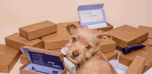 Small dog in front of custom shipping boxes