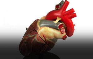 Thumbnail for I [Heart] the Heart