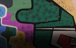 Thumbnail for From Picasso to Kiko, Through Burle Marx