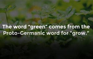 Thumbnail for 10 Things You Might Not Know About the Color Green [Video]