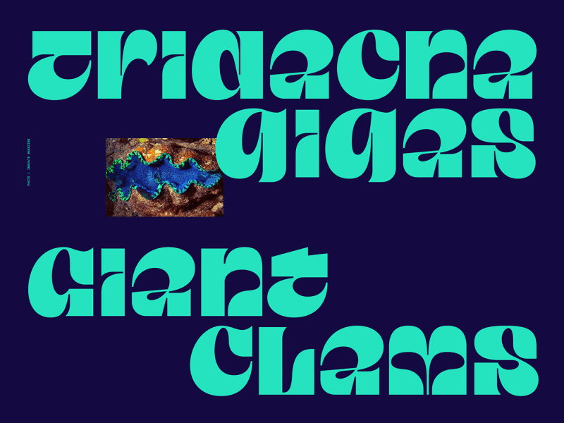 Thumbnail for Type Tuesday: Taklobo Was Inspired By Giant Clams