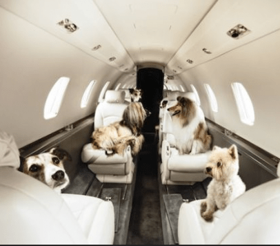 Private_Jet_Charter_Pets-406x356