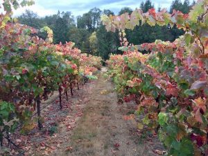Delfino Vineyards & Winery