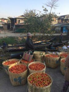 agricultura local en Myanmar