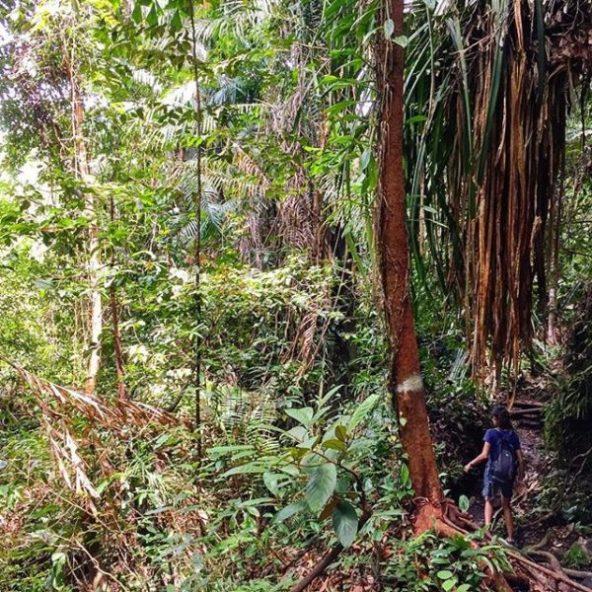 Bako y su densa jungla
