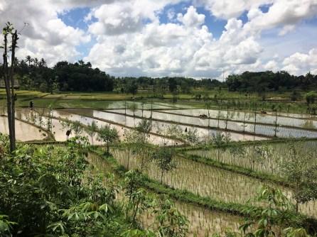 arrozales de Tetebatu, Lombok