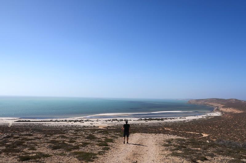 playa de shark bay