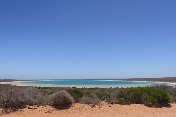 Laguna de Shark Bay