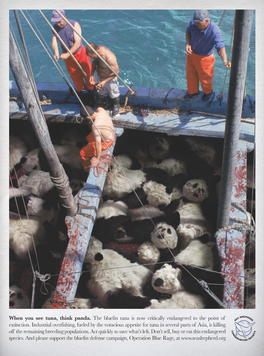 Quando você ver um atum, pense num panda. O Atum Bluefin está em grande perigo a ponto de ser considerado em ponto de extinção. Culpa da pesca industrial excessiva e da demanda crescente em algumas partes da Ásia. Aja agora antes que seja tarde demais.