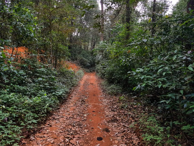The walk to the Rainforest Research Center