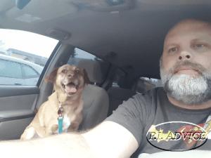 Taking Dogs on Surveillance