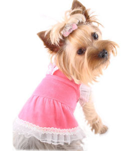The Toy Breed of Dogs could use an online collection of