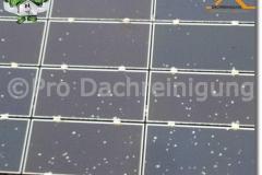 pro dachreinigung561