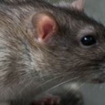 Plagued by Pests? Domestic Pest Control in Oldham Will Help