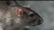 Mice and Pest Control in Altrincham