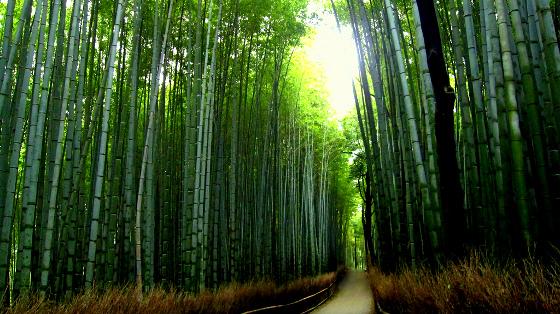 Мистическая Долина Хэйчжу (Лощина черного бамбука): факты, истории, тайны