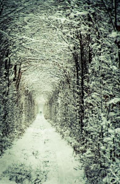 Тоннель любви в Клевани зимой