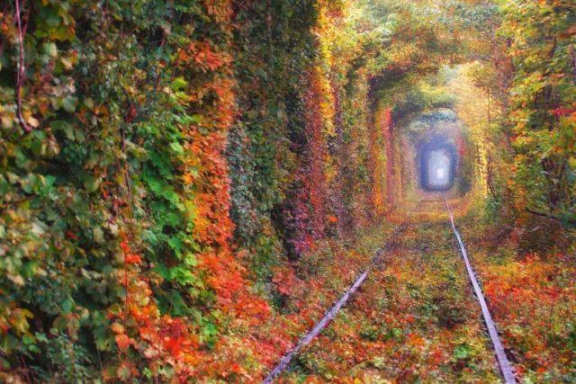 Тоннель любви в Клевани осенью