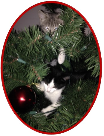 Take Care of your Pets at Christmas