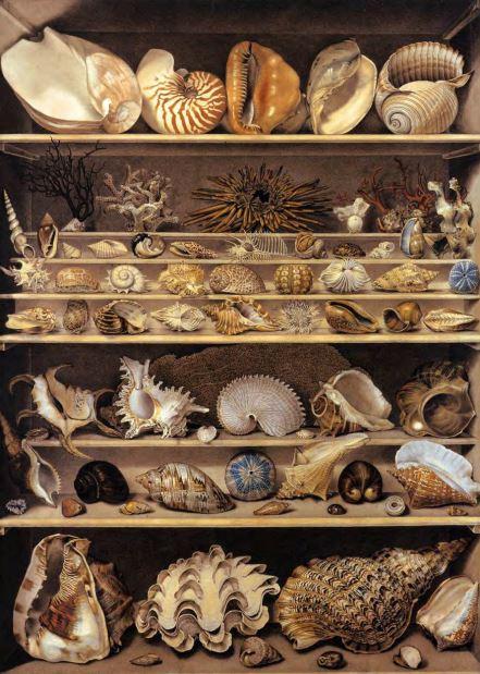 Alexandre Isidore Leroy de Barde, Choix de coquillages rangés sur des rayons,