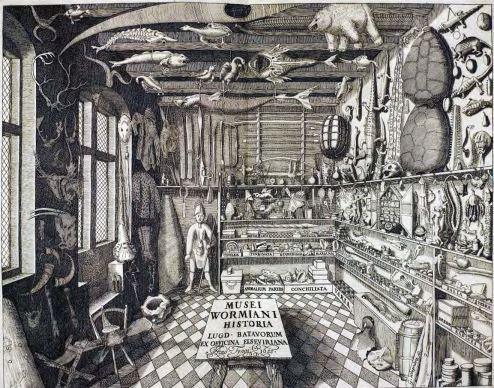 Cabinet de curiosités d'Ole Worm