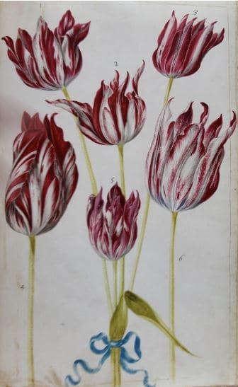 """exposition """"Œillets, Tulipes, Anémones"""""""