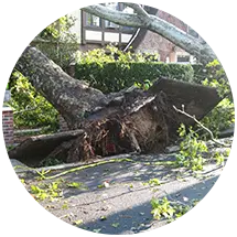natural disaster tree removal